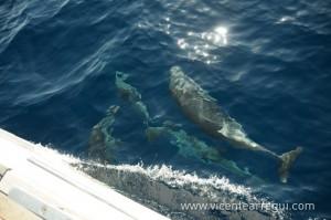Delfines en la Ophiusa